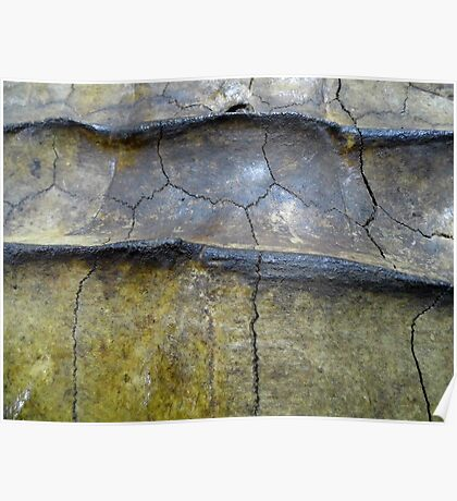 Alligator Snapping Turtle Shell Poster