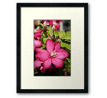 Colorful Petunias Framed Print