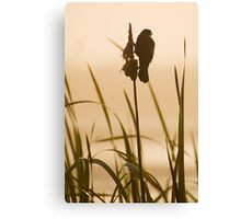 Red-winged Blackbird Silhouette Canvas Print