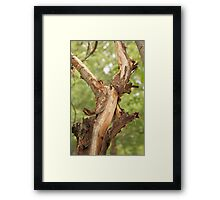 Bark Stripping Framed Print