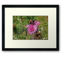 Bee and Purple Flower Framed Print