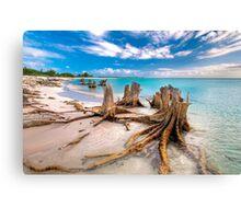 Tree stump from Cuba Canvas Print