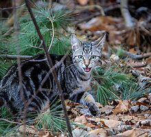 Little Wild One by Mikell Herrick