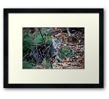 Little Wild One Framed Print
