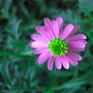 Pink flower on green by donnagrayson