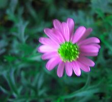 Pink flower on green by Donna Grayson