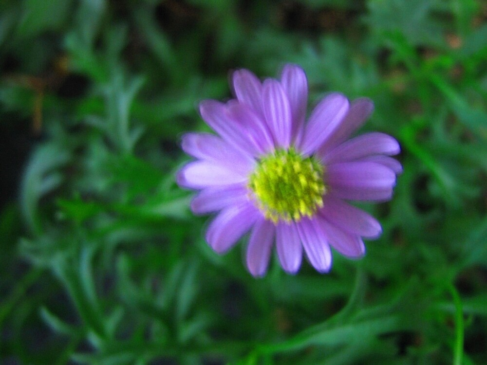 Purple Flower on Green by donnagrayson