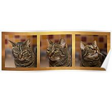 Cats mood swing Poster