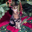 First Christmas by Mikell Herrick