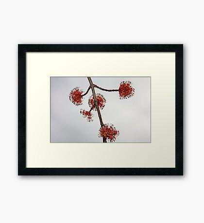 Leaf Buds Framed Print