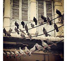 birdies Photographic Print