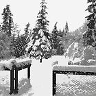 Snowy trees  by wsellers