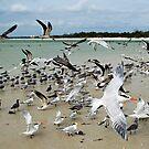Seabirds by Michael Damanski