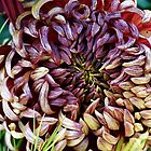 Autumn Mum by Loree McComb