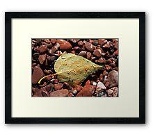 Leaf and Pebbles Framed Print