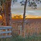 Bush Sunset by Jenni Greene