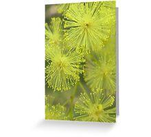 Wattle Blossom Greeting Card
