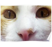 Curious Orange Cat Face Poster