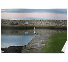 Heron in St Andrews Harbour Poster