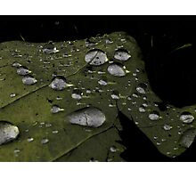 Rain Drops Photographic Print