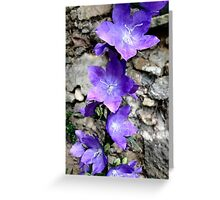 Fairy Bower Greeting Card