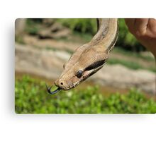 A Snake's forked tongue Canvas Print