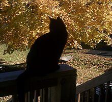 Black Cat, Fall Day by Brenda Hopkins