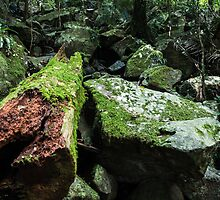 Mossy log by Brent Randall