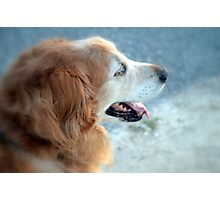Dog Gone I Photographic Print