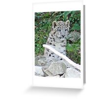 Zürich Zoo, Snow Leopard Mohan Greeting Card
