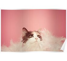 Penny Lane, Most Fabulous Kitteh Poster