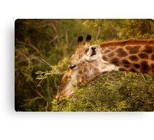 Kruger Parc - South Africa Canvas Print