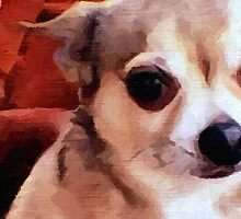 Dexter the Potted Chihuahua -closeup by BrianJoseph