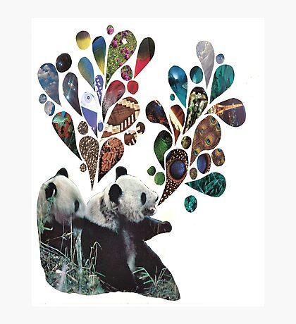 Noisey Pandas Photographic Print