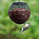 Tit on a feeder by Matthias Keysermann