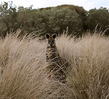 Wallaby in the Bush by Lisa Klement