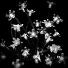 Fairy Lights, Blacks & Whites by lisa1970