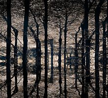 Woodland - 3 by maxblack