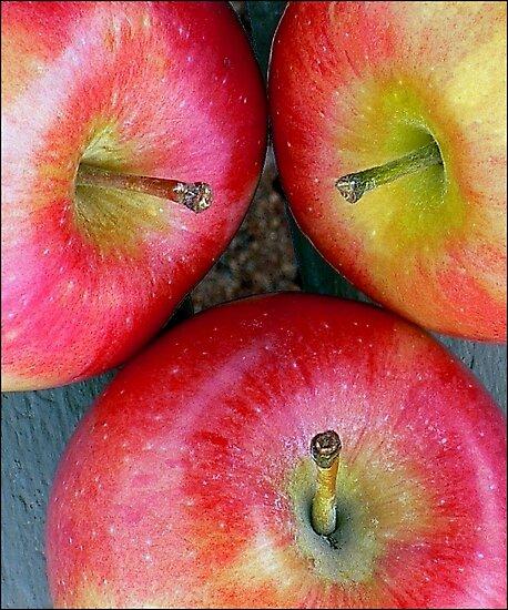 Apple,Apple,Apple Stems by paintingsheep