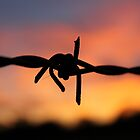 Barbed Silhouette by Vicki Spindler (VHS Photography)