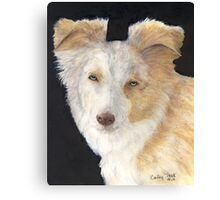 Mini Aussie Dog Red Merle Cathy Peek Art Canvas Print