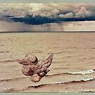 Birdie on Water by Diane  Kramer