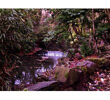 Autumn Colours... Photographic Print