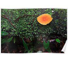 Green orange wet Poster
