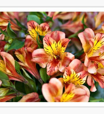 Peruvian Lily Sticker