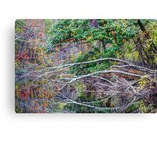The Tree That Sandy Felled Canvas Print