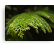 Softly Evergreen Canvas Print