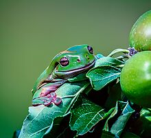 Apple Frog.... by Tracie Louise