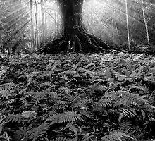 Magic on Maui by Michael Treloar