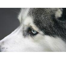 white eye Photographic Print